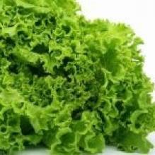 О пользе листьев салата